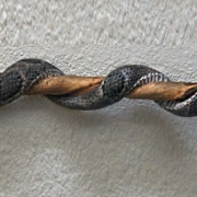 Hand Carved Rattlesnake Walking Stick