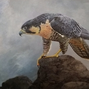 Peregrine Falcon: Queen of All She Surveys