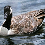 Canada Goose Federal Duck Stamp Top 20